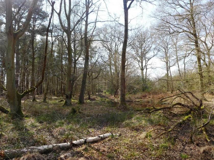 Woodland at Whitmoor Common