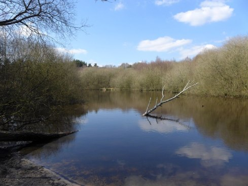 Pond at Whitmoor Common
