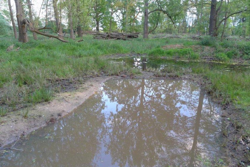 Canal Plantation