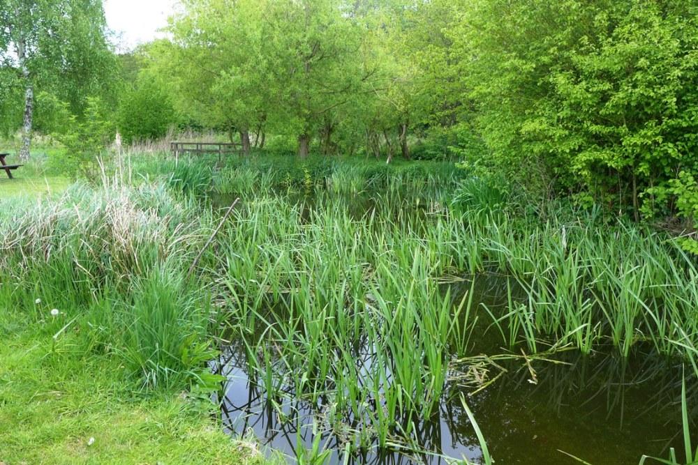 Pond at Bushy Park