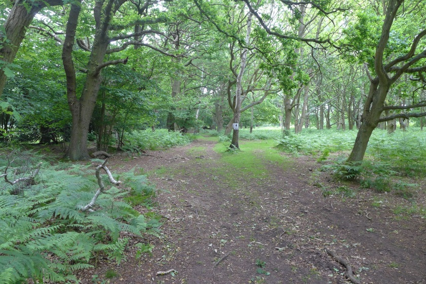 woodland at Wisley Common