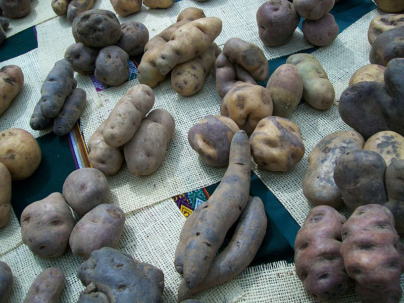 Andean potatoes
