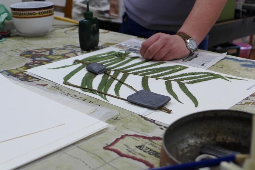 Fern specimen being mounted at Kew