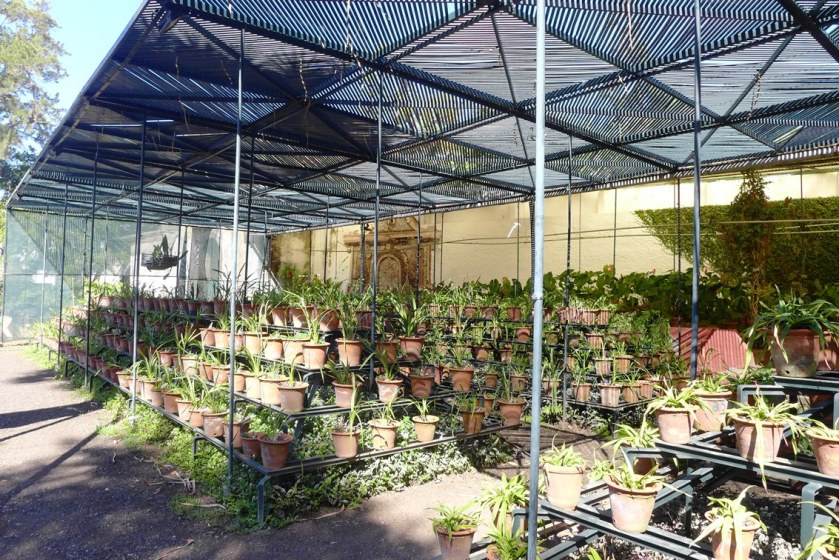 Orchid shadehouse