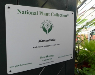National Collection of Mammillaria (2)