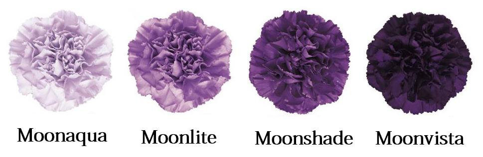 moon-series