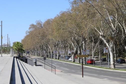 IMG_3796 Avenue of Plane trees (Copy)